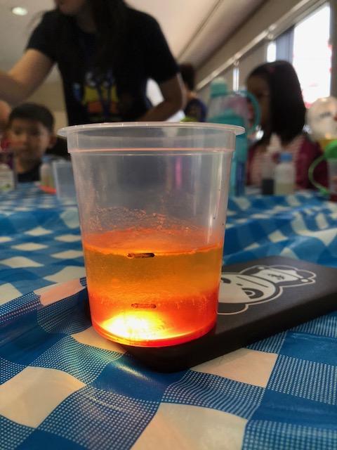 science workshop lava lamp